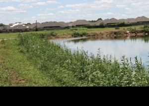 The excess-treatment lagoon at the Mustang Waste Water Treatment Plant sits not far from the Chisholm Trail housing addition. Residents say the smell from the plant has been worse than ever in the past few weeks. (Staff photo by Jon Watje)