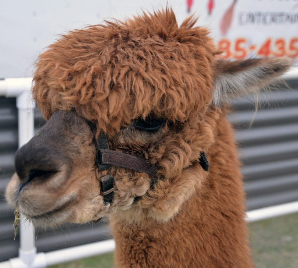 Mustang Creek Alpaca sells a variety of alapaca products online both online at local shows. (Provided photo)